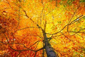 Spaziergang im goldenen Herbst