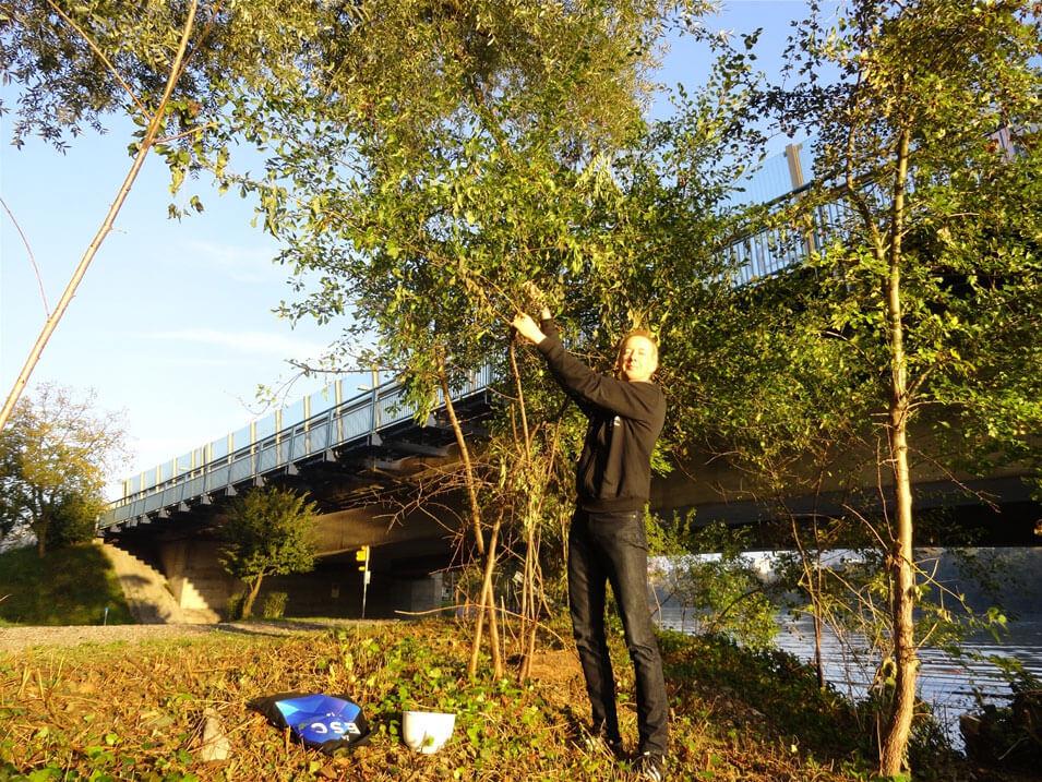 Sportlich: Schlehenpflücken am Ufer der Limmat